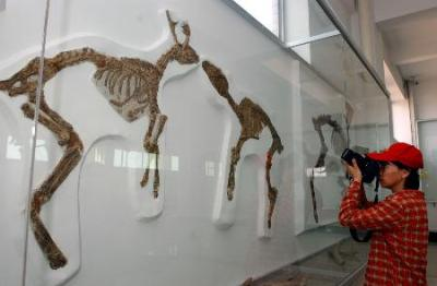 World's largest dinosaur museum photo, dinosaur museum picture, Shandong Tianyu Museum, largest dinosaur museum Guinness World Records, dinosaur museum in east China