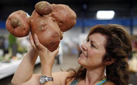 worlds biggest potato photo worlds biggest potato picture amateur potato garden biggest potato