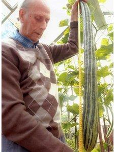 World's Longest cucumber photo, Longest cucumber in the world, biggest cucumber picture, Frank Dimmock Longest cucumber Guinness World Record, Mr Dimmock's gigantic cucumber