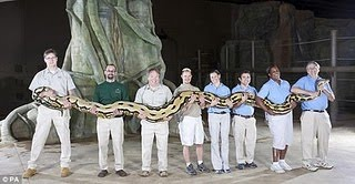 world longest snake photo 2011 world longest snake picture new guinness world records 2011